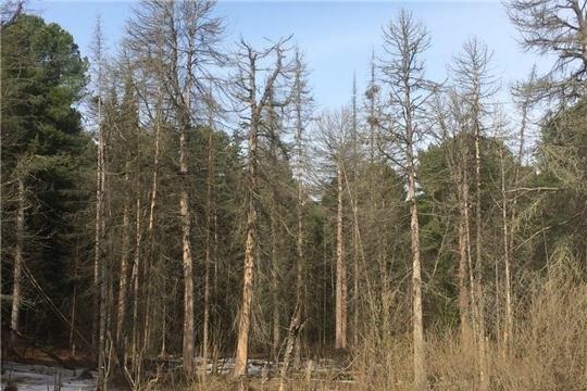 Сбор валежника в лесу: новые правила с 2021 года