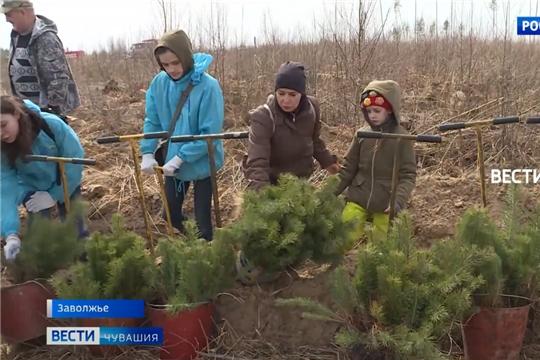 """В рамках акции """"Сад памяти"""" в Заволжье высадили 5 тысяч деревьев"""