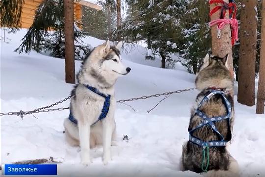 Заволжье, лоси и собаки: в Чувашии впервые прошел межрегиональный чемпионат по ездовому спорту