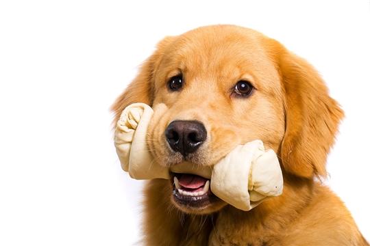 Можно ли давать собакам кости?