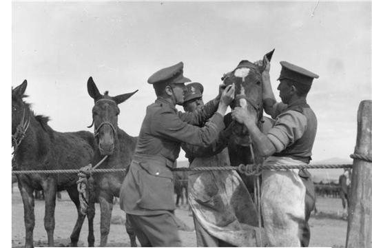 Ветеринарные врачи Чувашии, принявшие участие в Великой Отечественной войне