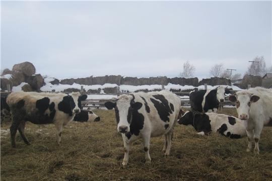 Оперативные сведения по надою молока