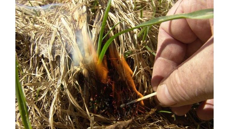 Пал сухой травы опасен!