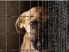 Безнадзорные животные - одна из главных нерешённых проблем современного общества