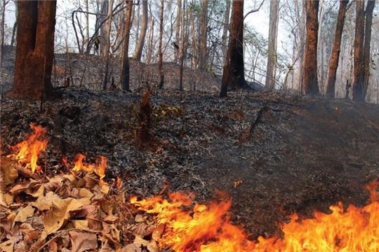 Сжигание листвы и сухой травы может привести к пожару!