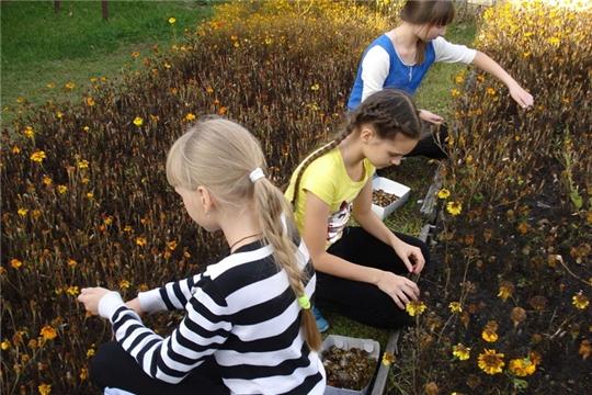 Юные шумерлинские цветоводы «готовят сани летом»