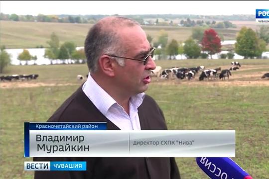 Красночетайские фермеры придумали способ увеличить надои молока