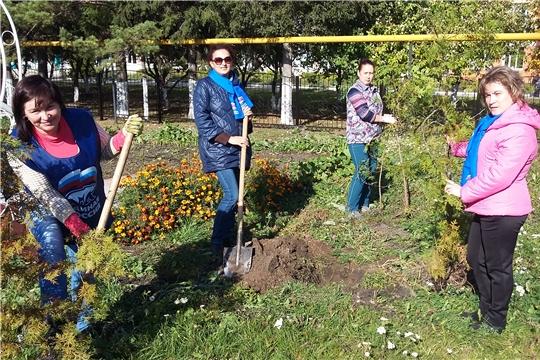 В рамках акции «Посади дерево и сохрани его» посажено более 40 саженцев туи