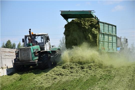 Перевыполнены планы по заготовке сочных кормов
