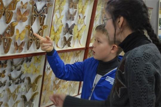 Приглашаем на выставку «Бабочки и жуки мира»