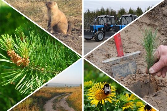 Министр природных ресурсов и экологии Чувашской Республики И.Исаев выступил с отчетом о деятельности Министерства