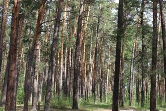 И снова о порядке заключения с гражданами договоров купли-продажи лесных насаждений для собственных нужд