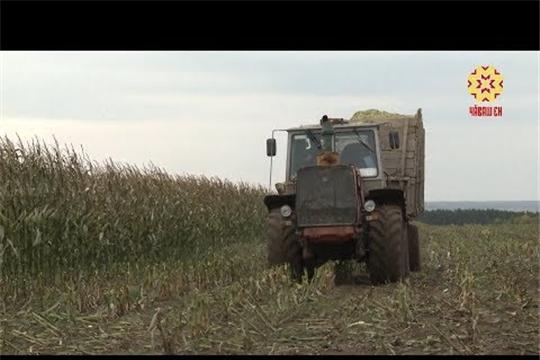 Кукуруза активно возвращается на поля республики