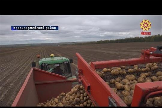 Уборка зерновых и зернобобовых позади