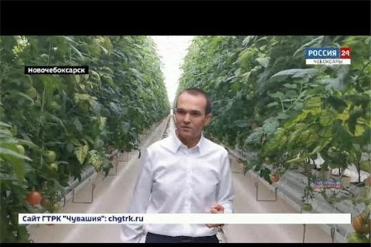 Тепличный комплекс в Новочебоксарске торжественно откроют 1 ноября
