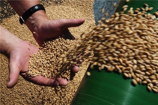 Аграриям Чувашии в ближайшие дни перечислят 79,6 млн. рублей на элитные семена