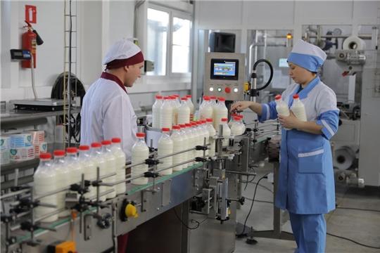 Глава Чувашии Михаил Игнатьев в Янтиковском районе посетил новый производственный цех ООО «АККОНДМОЛОКО»