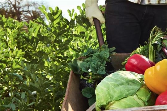 Федеральный закон № 280 – ФЗ «Об органической продукции и о внесении изменений в отдельные законодательные акты Российской Федерации» вступает в силу с 1 января 2020 года