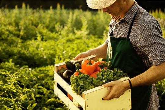 В 2020 году фермерские гранты будут выдавать на новых условиях. Пять главных изменений