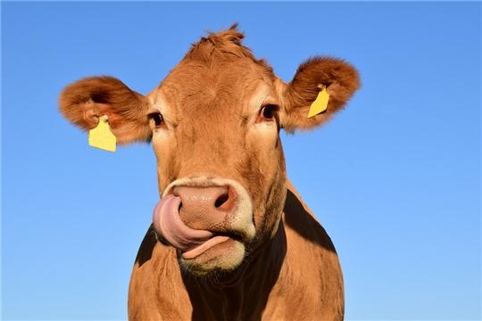 Льготное кредитование молочной отрасли вырастет на 30%