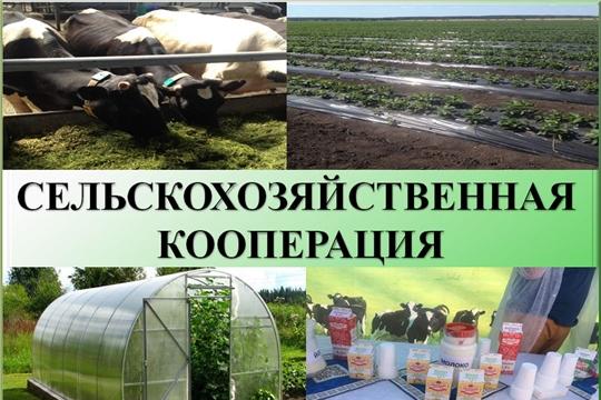 Обучение основам деятельности сельскохозяйственных потребительских кооперативов