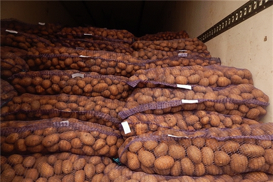 Фермерами Чувашии экспортировано 800 тонн картофеля.