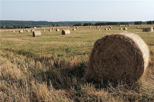 Совет Федерации одобрил закон о защите прав женщин на селе