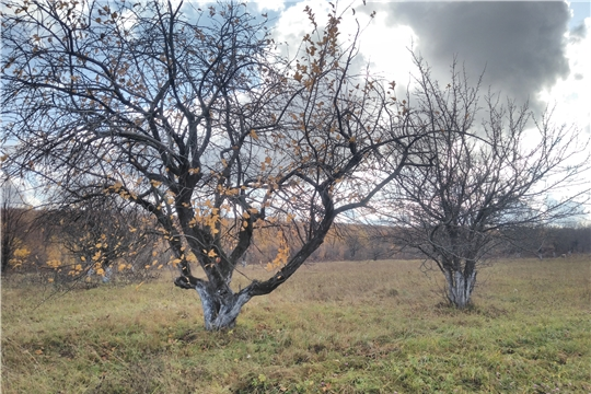 Проверка целевого использования сельхозземель в Ибресинском и Моргаушском районах