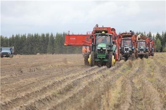 В хозяйствах 8 муниципальных районов уборка картофеля завершена
