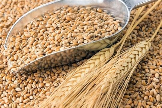 Урожайность зерновых, картофеля и овощей в Чувашии выше средней урожайности по России