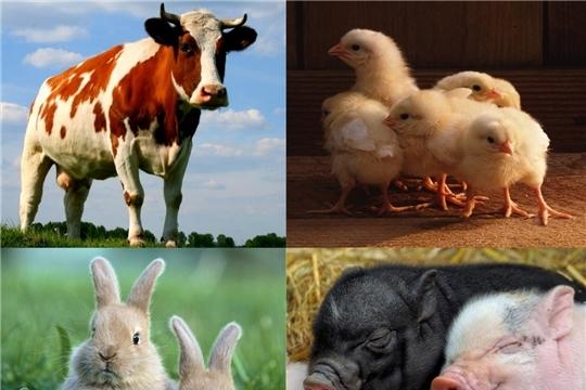 В хозяйствах республики наращиваются темпы производства животноводческой продукции
