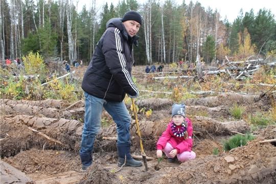 Более тысячи деревьев посадили волонтеры Чебоксарской ГЭС на месте лесных пожаров в Заволжье