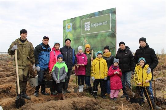 Активные папы вместе со своими семьями вышли на посадку деревьев в Заволжье