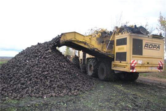 В хозяйствах Шемуршинского района уборка кормовых завершается