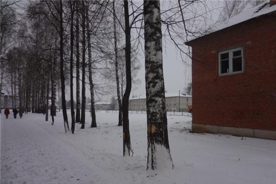 Вырубка старовозрастных и аварийных деревьев в парке культуры и отдыха пос. Урмары