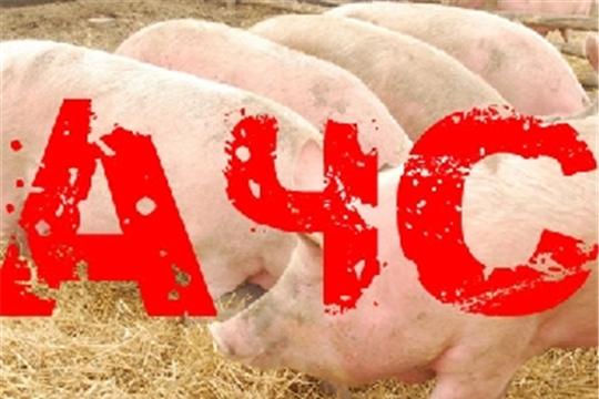 Профилактика африканской чумы свиней в Чувашской Республике