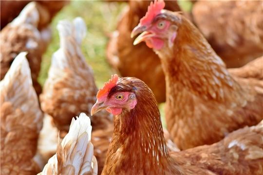 Утверждены итоги республиканского конкурса «Кооперативная организация – лидер продаж молодняка скота и птицы населению»