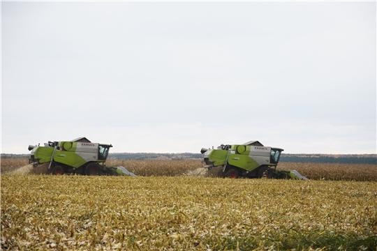 Уборка кукурузы на полях АО «Вурнарский мясокомбинат»
