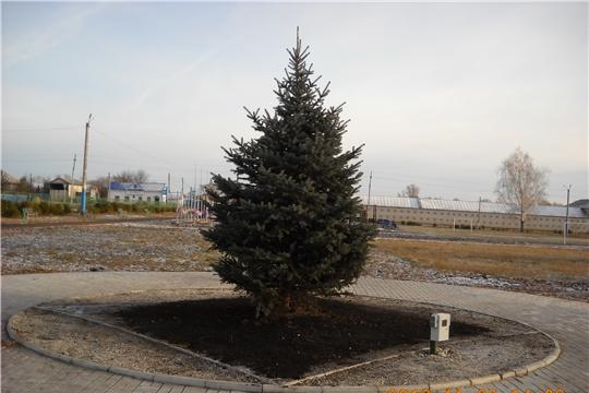 В селе Яльчики установлена главная новогодняя ёлка