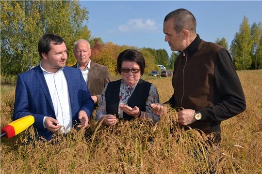 Урожайность зерновых в хозяйствах Алатырского района достигает 49 ц с гектара