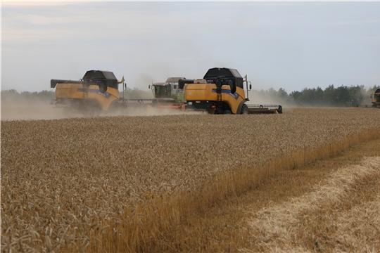 Продолжается уборка урожая в филиале ООО «Авангард «Батыревский Бекон»