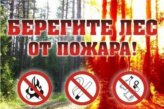 Минприроды Чувашии просит граждан воздержаться от свободного посещения лесов в дни высокой пожарной опасности в лесах
