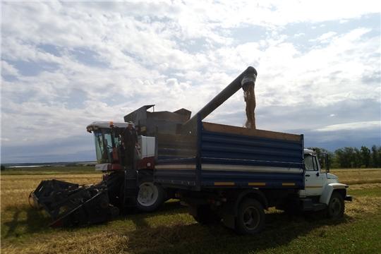 В Чебоксарском районе вышли на уборку урожая