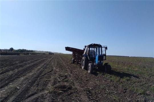 В Чебоксарском районе идет уборка картофеля