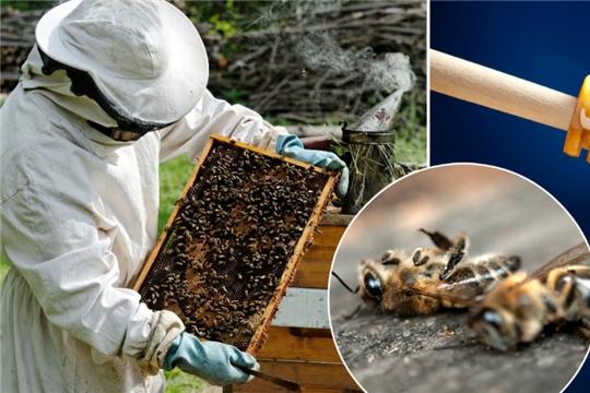 Мероприятия для предупреждения отравления пчёл пестицидами