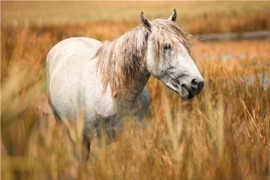 Ветеринарные правила по профилактике и ликвидации гриппа лошадей
