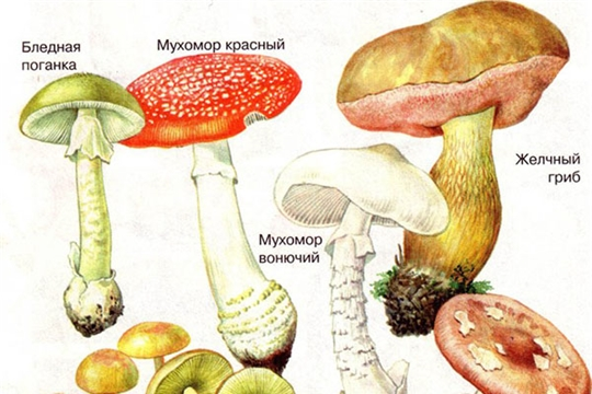 Сезон грибов: будьте осторожны!