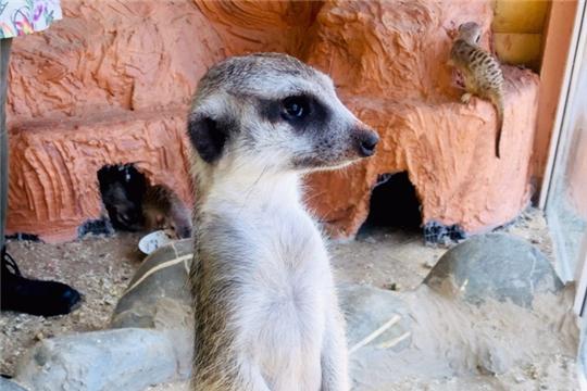 В зооуголке «Ковчег» поселились новые обитатели