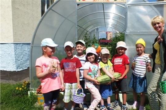 Детские сады города Чебоксары реализуют природоохранный социально-образовательный проект «Эколята-дошколята»