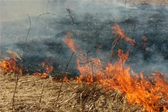 Правила поведения при сжигании сухой травы